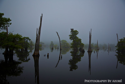 Fog On The Dead Lakes