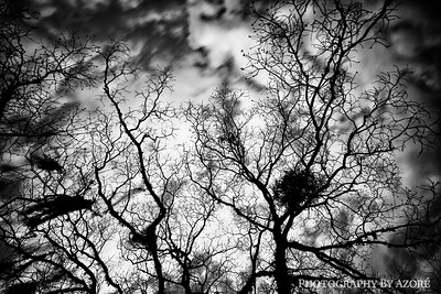 Above The Trees Black and white photography, fine art photography, landscape photography, long exposure photography, tree photography,