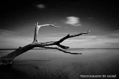 A Distant Shore Line