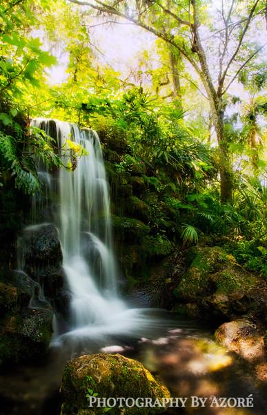 Harmonious Nature