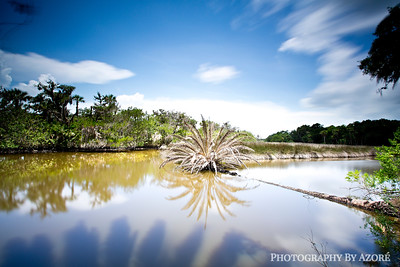 Florida's Natural Landscape