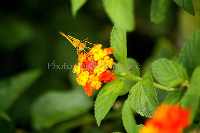 Moth Hunger