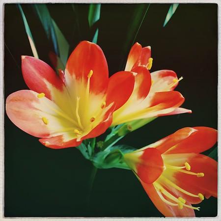 Blazing blooms