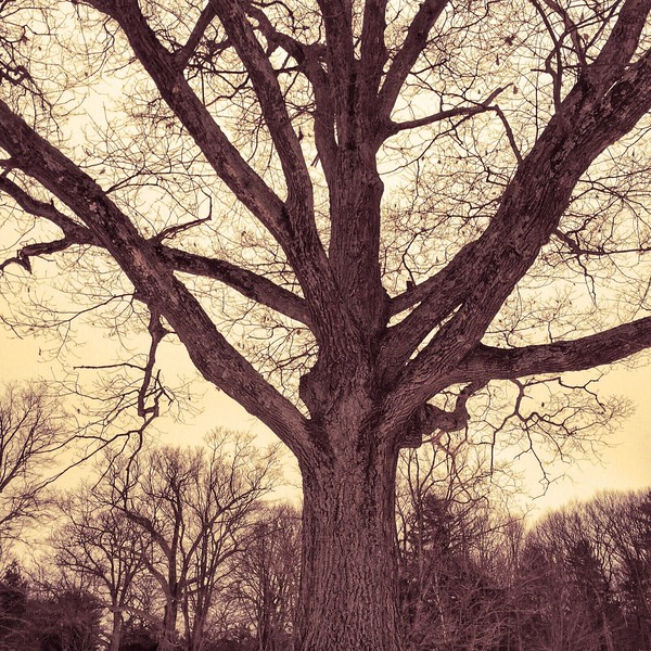 Trees are your best antiques ~ Alexander Smith