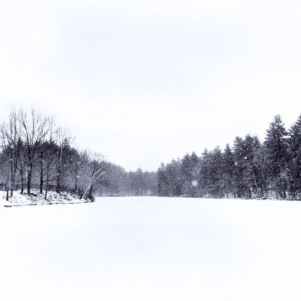 White cold