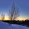 Winter silhouettes