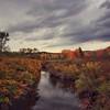 Vintage autumn