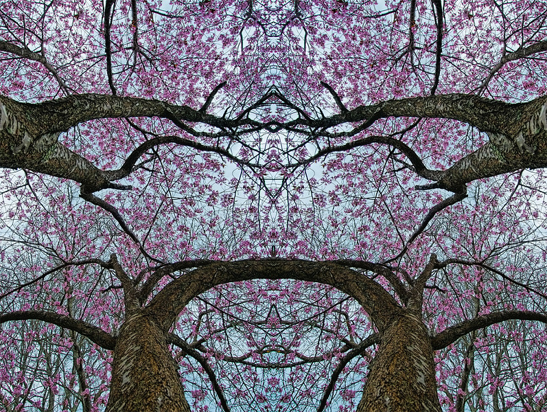 Mysery FLowering In the Trees (2) :  Symmetry Series #40