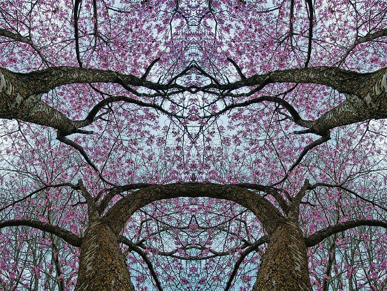 Mysery FLowering In the Trees (2) :  Symmetry Series #40