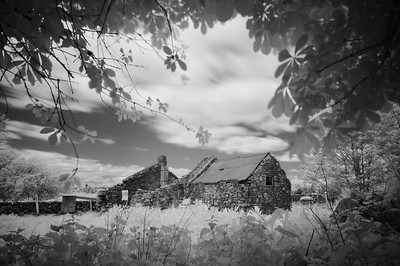 Ruin with Horse Chestnut, Galloway, Scotland. 2016