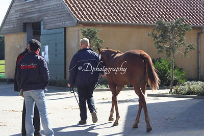 Åringsauktion/auction - York Stud