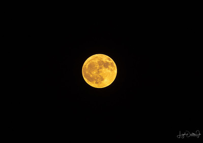 Harvest Moon - September 24,  2018 on Galveston Island