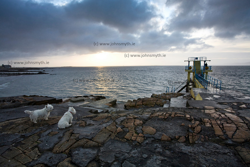 Two dogs waiting for their owner to return from a morning swim at the Blackrock diving board on Salthill Promenade in Galway.