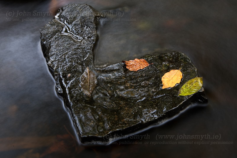 Autumn leaves on a rock in the Graigabbey river, between Athenry and Attymon, Co. Galway