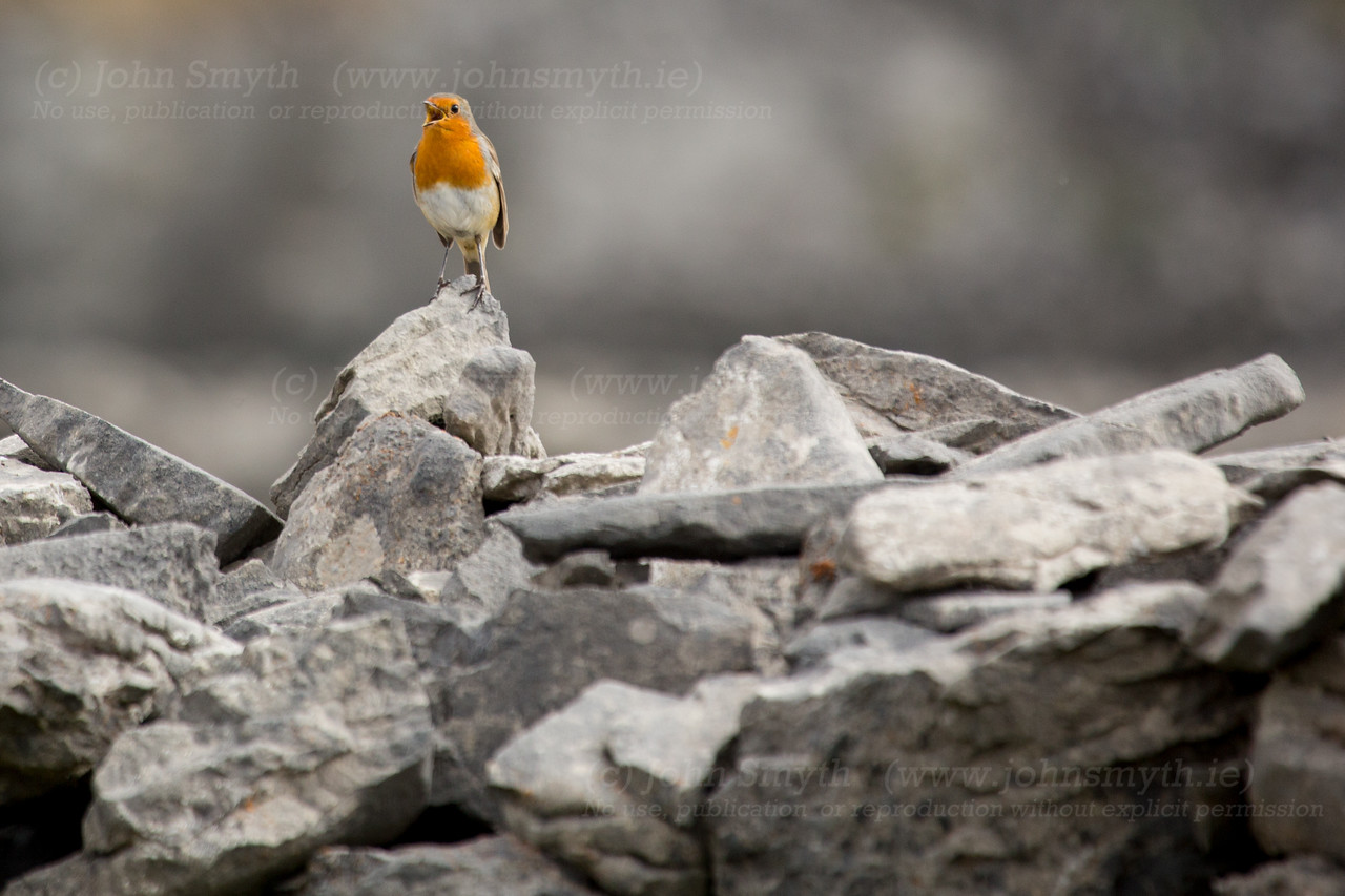 Robin on inis Mor
