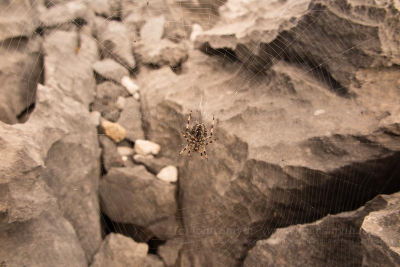 Spider on Inis Mor