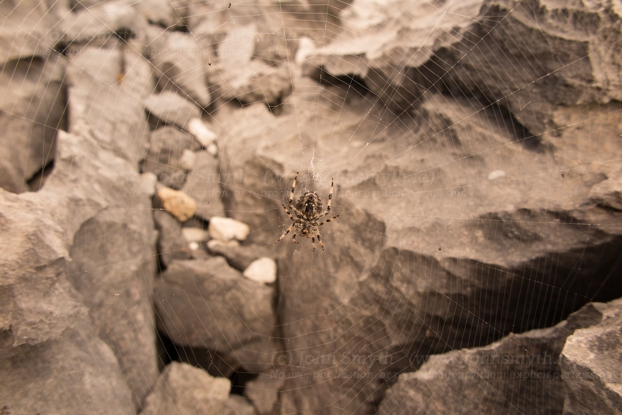 Spider on Inis Mor