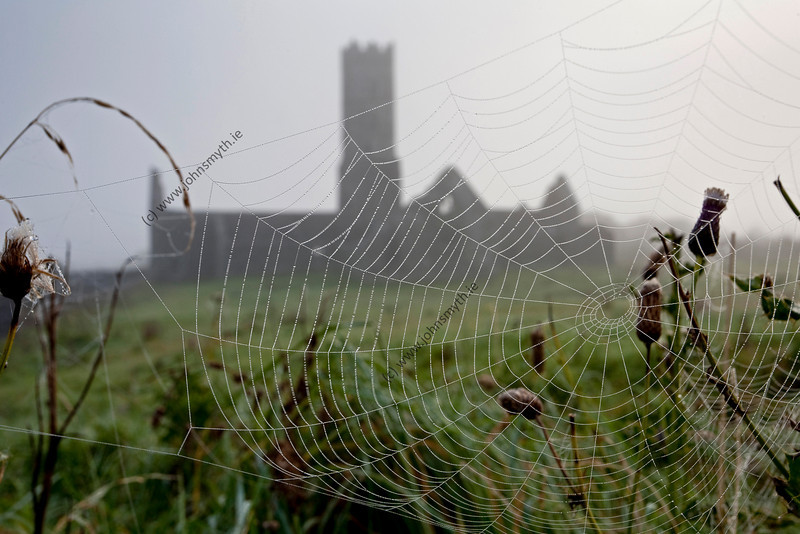 A spider web delineated by morning due with Kilconnell Friary in the background.