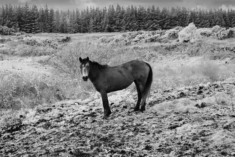 A horse in a field near Spiddal in west Galway