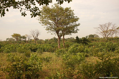 Jungle, The Gambia