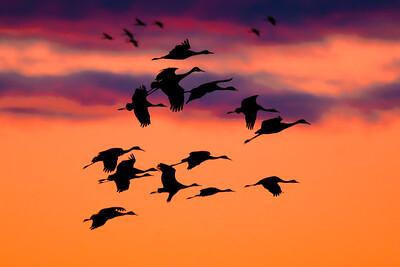 Sunsetter Cranes