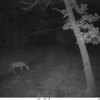 Bushwhack Camera