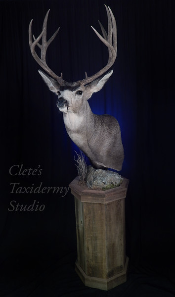 Barn wood pedestal Wyoming mule deer