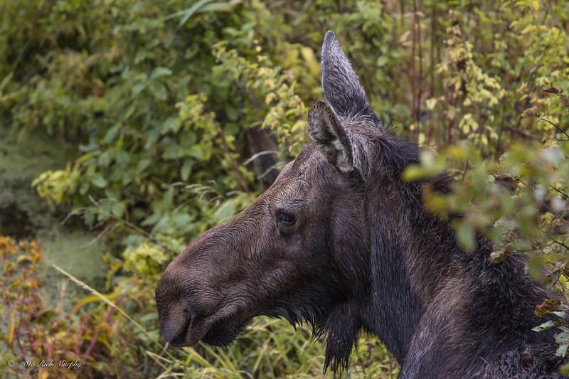 A watchful eye. Teton National Park