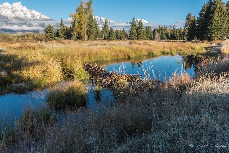 Morning at the beaver pond. Teton National Park