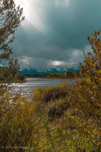Shades of yellow. Teton National Park