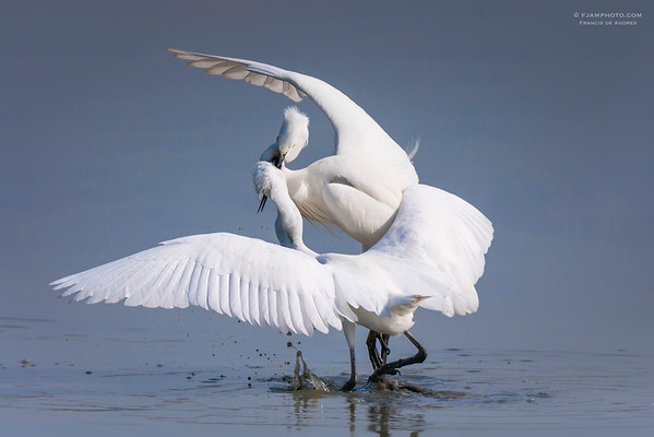 World of Egrets