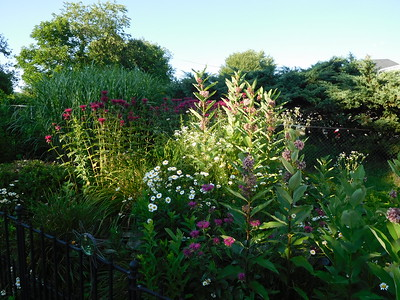Garden Mid July