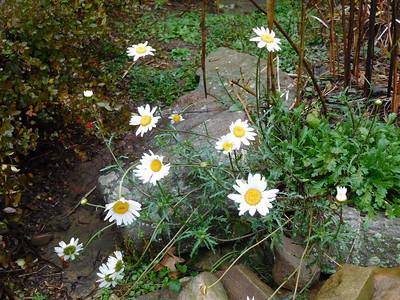 Late October Garden