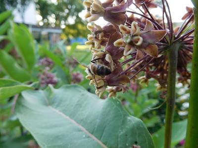 Mid July Garden 2