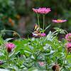 Garden 2015, Columbia, SC