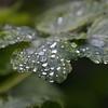 Sparkles of Rain