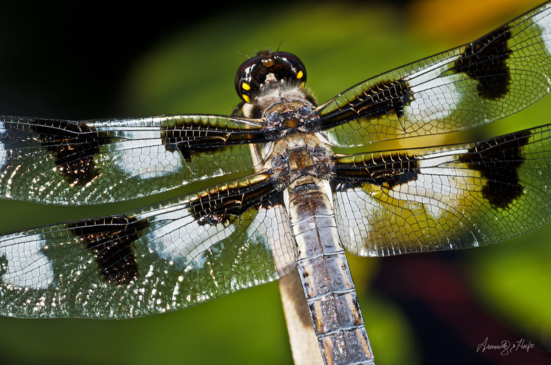 Dragonfly 6/8/2012