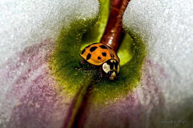 Lady Bug 11/21/2009