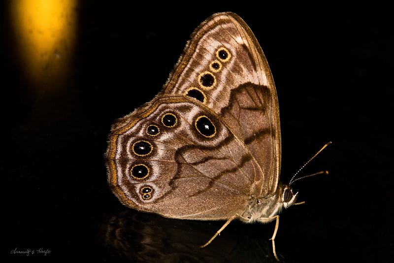 Butterfly  6/30/2009