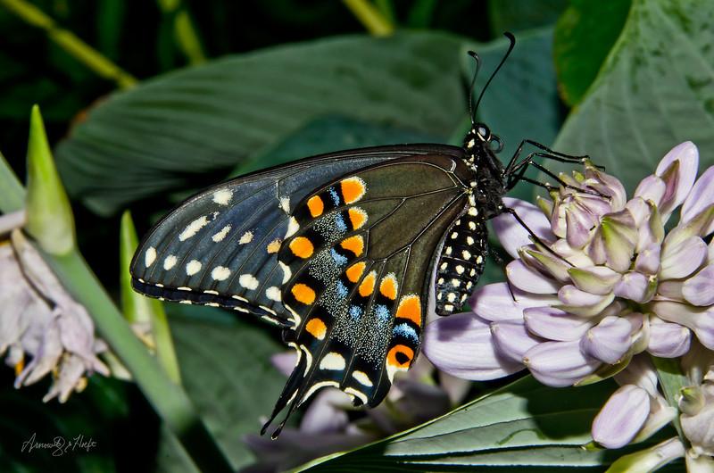 Butterfly  7/23/2012