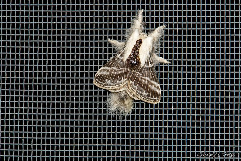 White Moth 9/15/2006