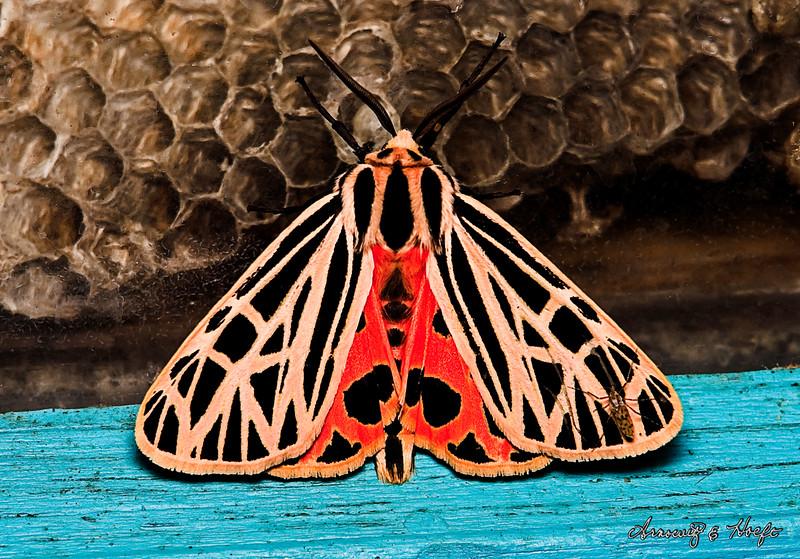 Moth  7/22/2007