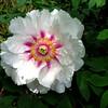 2010-05-02 Brooklyn Botanical Gardens (228) levels