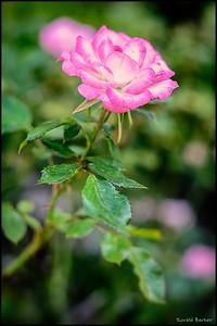 Budha Flower.jpg