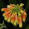 2010-05-02 Brooklyn Botanical Gardens (332)a