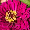 flower        1311