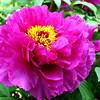 2010-05-02 Brooklyn Botanical Gardens (193) - levels