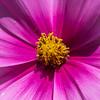 flower          511