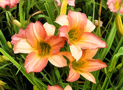 Day Lily 05