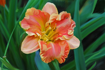 Day Lily 01